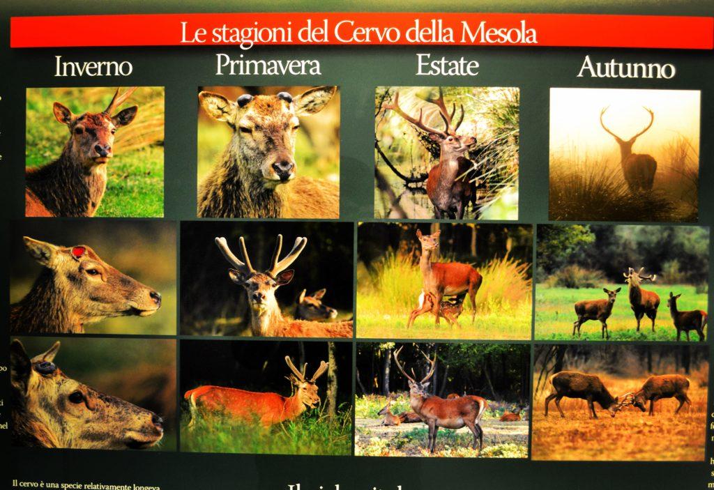 Castello Estense di Mesola Museo del Bosco e del Cervo della Mesola