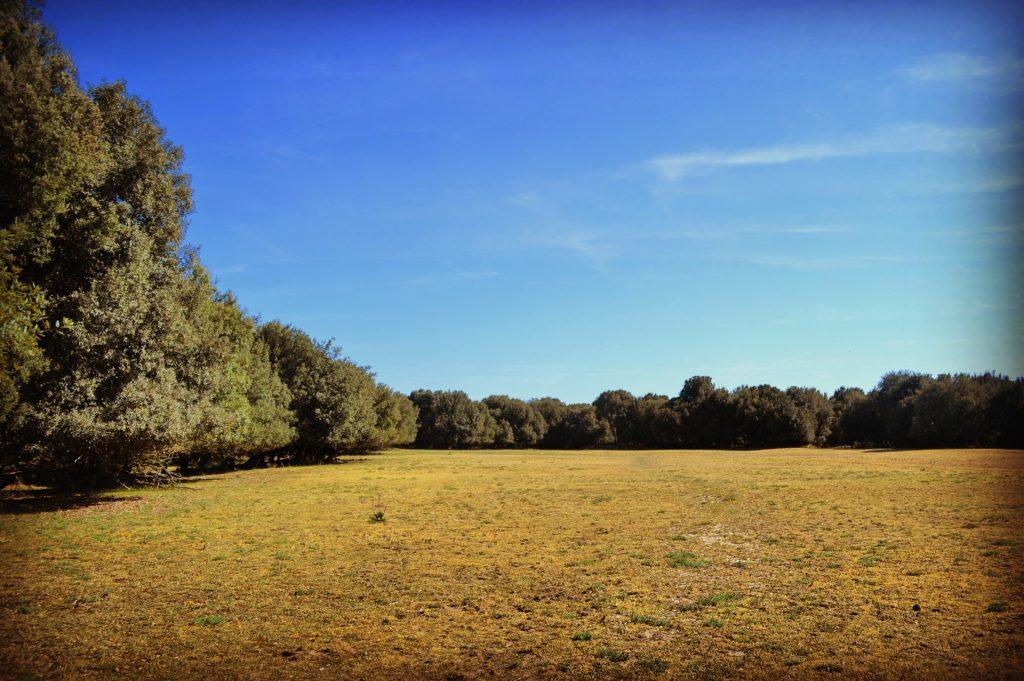 Parco delle Duchesse Riserva Naturale del Gran Bosco della Mesola
