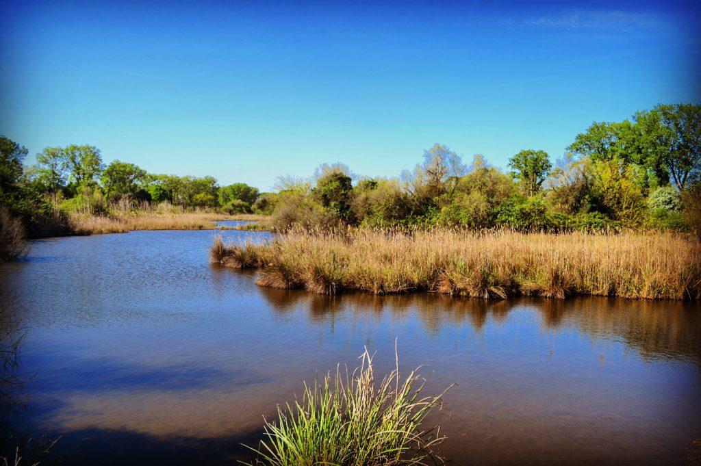 Laghetto Riserva Naturale del Gran Bosco della Mesola