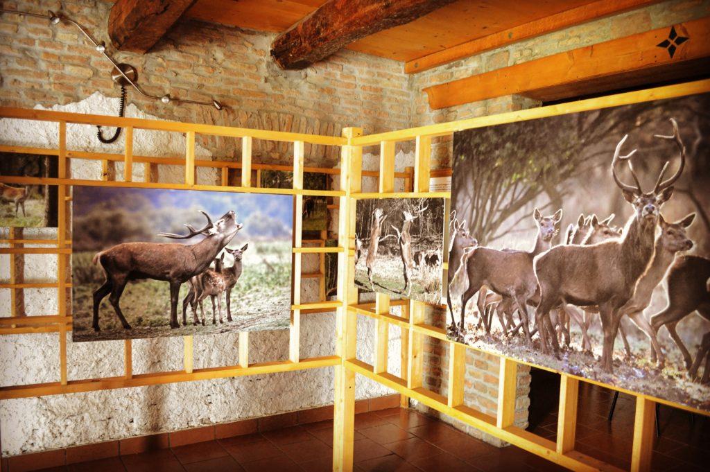 Mostra Riserva Naturale del Gran Bosco della Mesola