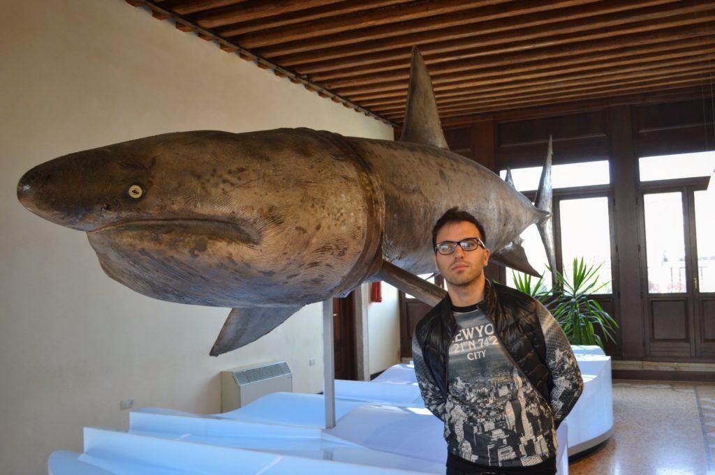 Museo di Zoologia Adriatica Chioggia Palazzo Grassi