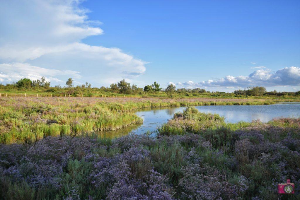 Giardino Botanico Litoraneo Porto Caleri percorso C blu