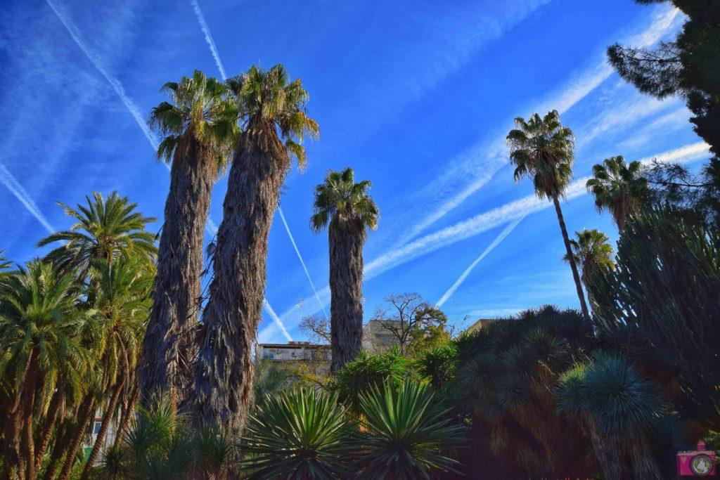 Cosa vedere a Valencia Giardino Botanico