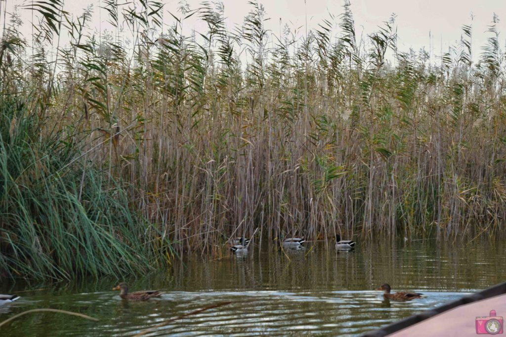 Cosa vedere nei dintorni di Valencia Parco Naturale dell'Albufera