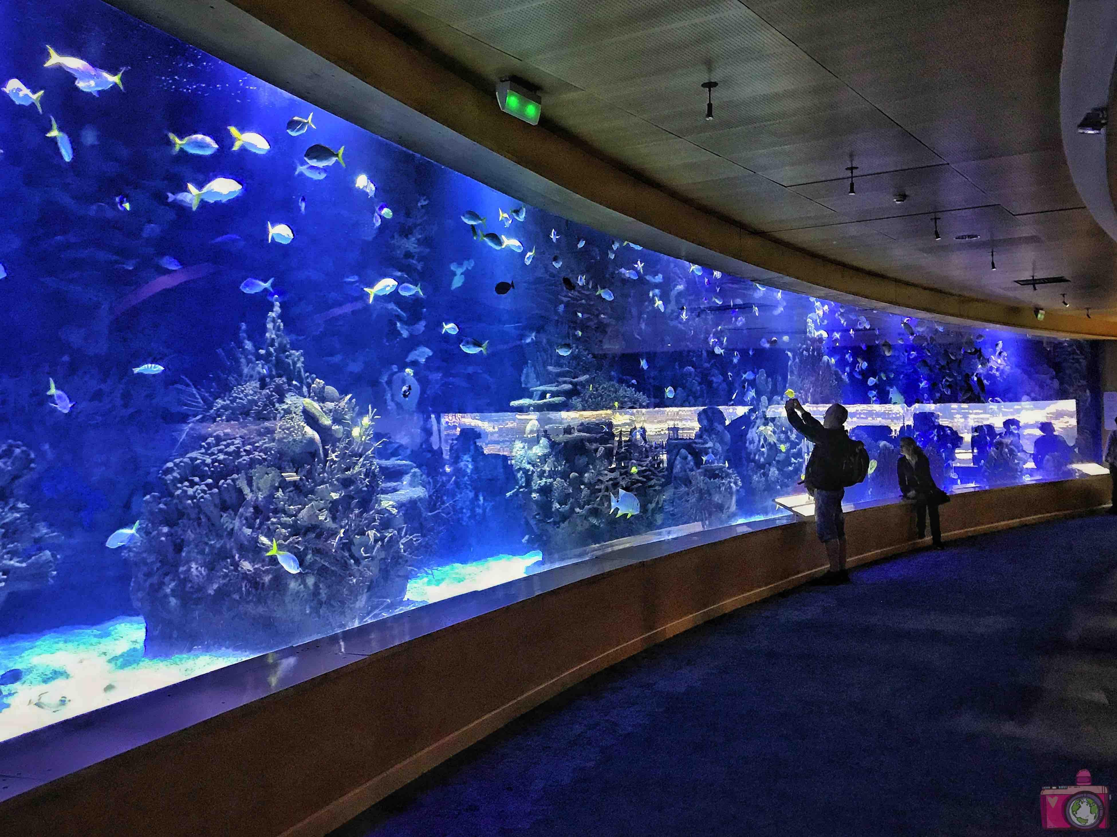 Città delle Arti e delle Scienze Oceanogràfic